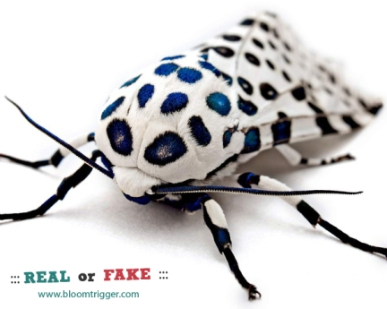 Giant Leopard Moth real or fake