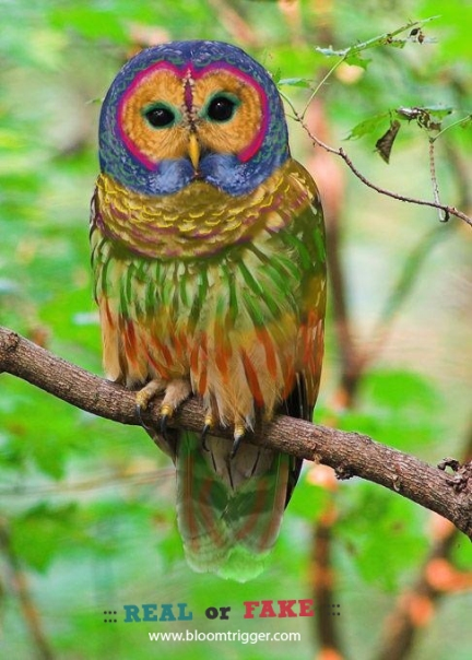 Rainbow Owl real or fake