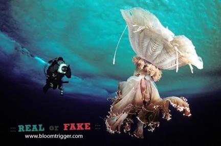 Scyphomedusa real or fake